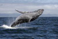 Hoe moeilijk kan een walvis?