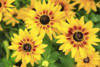 Bouw van een bloeiende plant