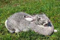 Wat eten konijnen voorkeur - dus het beheer van de gezonde voeding
