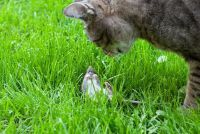 Plaag van muizen in de tuin - wat te doen?