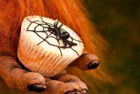 Halloween voedsel - ideeën voor de enge Buffet