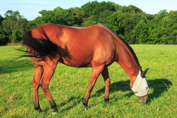Paard van vliegen en remmen te beschermen - Tips