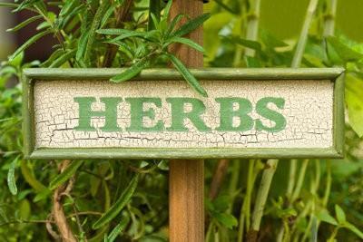 Balkon kruiden - zodat u de planten goed te onderhouden