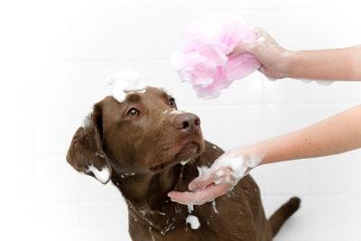 Hoe vaak moet ik wassen van een hond?  - Om de verzorging te beheren
