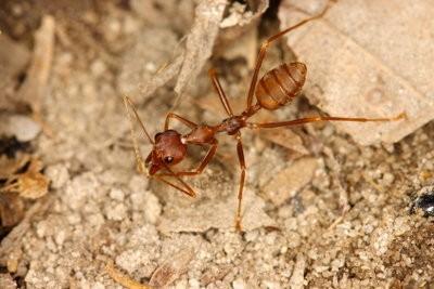 Azijn tegen mieren - zodat je het toepast