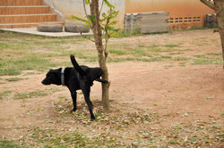 Hond plassen bloed - Nuttig