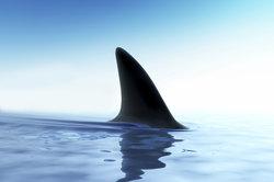 Als de haaien mensen waren - Interpretatie Guide