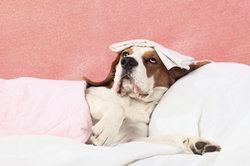 Wat helpt tegen droge hoest bij honden?
