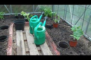 Planten in Greenhouse - dus doe het juiste