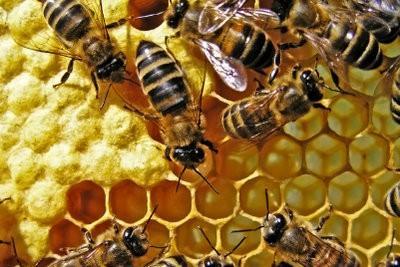 Wat is een Bee?  - Meer informatie over de honing leveranciers Ontdek