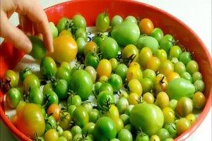 Rijpen groene tomaten - dus het zal werken