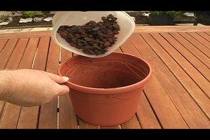 Gele bladeren van planten - zodat u kunt voorkomen met kamerplanten
