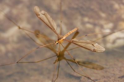 Repel muggen met huismiddeltjes