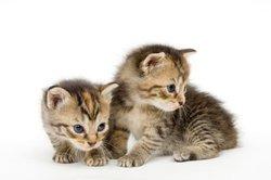Warrior Cats: maak merchandise zelf - dus slaagt's