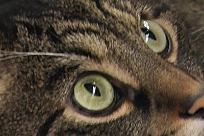 Voor de kat herrichten het balkon - het ontwerpen van ideeën