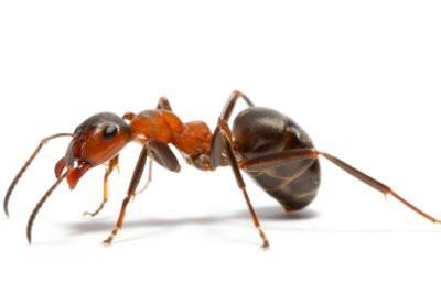 Wat helpt tegen mieren op het terras?  - Handige Ideeën