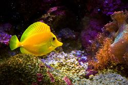 Koop vis voor de aquarium online - opmerkelijk