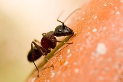 Wat helpt tegen mieren in de tuin?  - Tips
