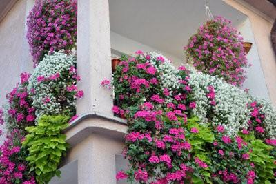 Een Winters Balkon : Winter planten voor balkon