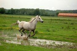 Koorts bij paarden - die u moet zich bewust zijn