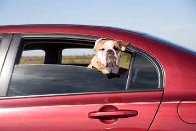 Verwijder hond geur in de auto met huismiddeltjes
