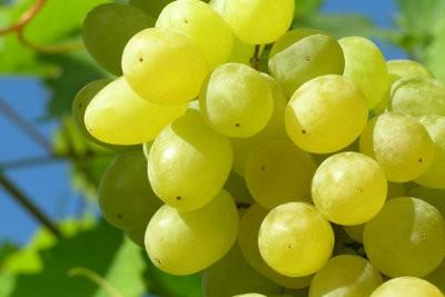 Was de druiven - op de juiste manier