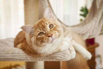 Build krabpaal voor katten zelf - hoe het werkt