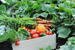 Teeltplan voor groenten - het resultaat is een bio tuin